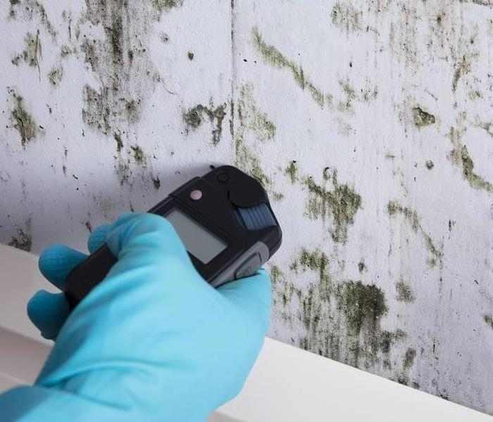 Assessing mold damage