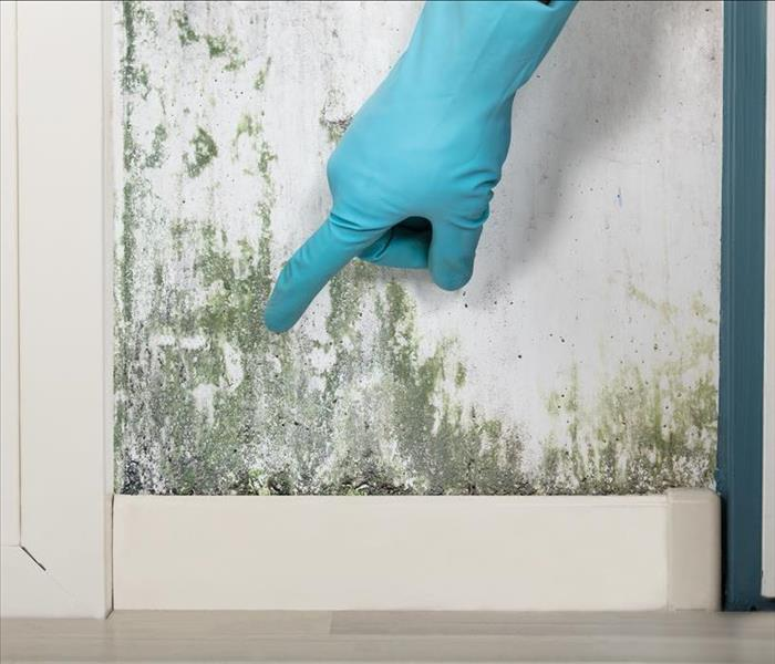 Mold Remediation Indoor and Outdoor Mold