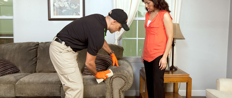 Hollywood, FL carpet upholstery cleaning